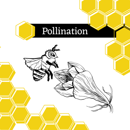 Pollination hand drawn vector illustration. Bumblebee and blooming flower ink pen sketch. Honey store packaging sticker. Honeycomb geometric shape. Stylized freehand Amarillis drawing