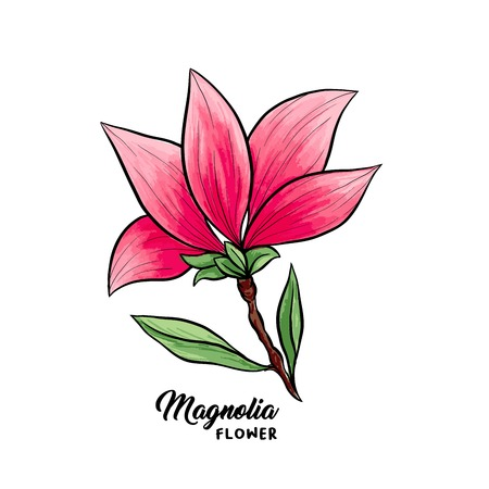 Magnolia flower in blossom, beautiful home decor and interior design, isolated illustration vector. Pink floral sketch drawing. Spring blossom realistic clipart. Wildflower pencil texture. Illustration