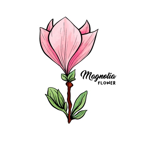 Magnolia flower in blossom, beautiful home decor and interior design, isolated illustration vector. Pink floral sketch drawing. Spring blossom realistic clipart. Wildflower pencil texture.