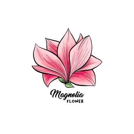 Magnolia flower in blossom, beautiful home decor and interior design, isolated illustration vector. Pink floral sketch drawing. Spring blossom realistic clipart. Wildflower pencil texture. Ilustracja