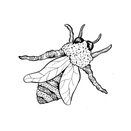 Honey Bee or Wasp Sketch Isolated Vector Illustration for  Design or Poster. Outline element for laser cutting