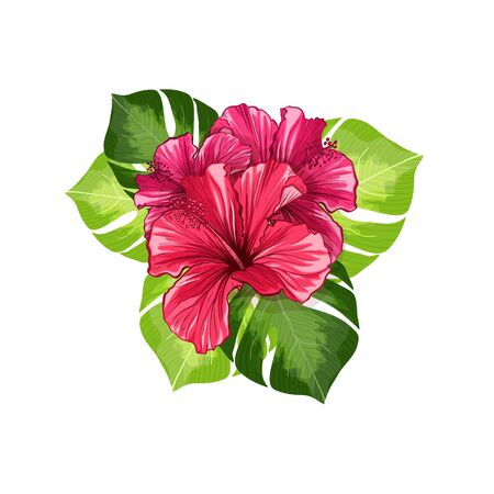 Tea Banner or Card Card with Hawaiian Hibiscus Red Fragrance Flower. Bright Green Leaves Vector Backdrop for Tea Packaging Print Design. Tropical Karkade or Bissap Herbal Tea