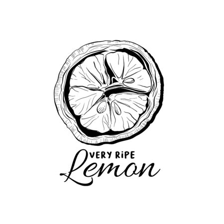 Lemon top view illustration. Fruit ink pen outline sketch. Black and white clipart with calligraphy inscription. Realistic citrus plant with leaves freehand drawing. Isolated monochrome design element Çizim