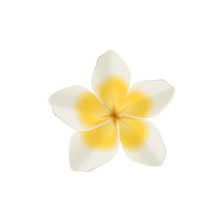 Plumeria white vector isolated illustration of hawaiian and tropical single flower with yellow petals.