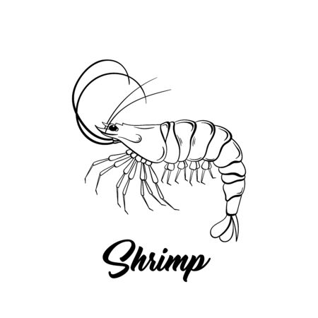 Shrimp black and white vector illustration. Marine life hand drawn monochrome sketch. Crustacean animal engraving.  Fresh prawns store poster, banner design element