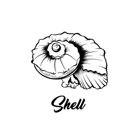Sea shell black and white vector illustration. Spiral shaped nautical creature freehand drawing. Exotic mollusk, marine invertebrate animal engraving. Summer vacation poster design element
