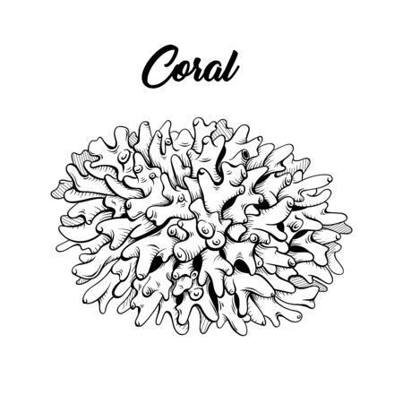 Coral black and white hand drawn illustration. Marine life, sea reef ecosystem wildlife sketch for coloring book. Aquarium decoration monochrome engraving. Scuba diving club poster design element Çizim