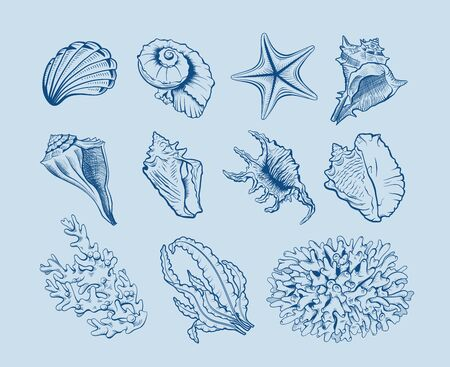 Marine life hand drawn vector illustration set. Seashells, scallops freehand drawings on blue background. Corals, reef ecosystem fauna, seaweeds, laminaria engraved outlines. Poster design element