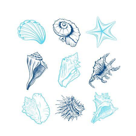 Conjunto de ilustraciones vectoriales dibujadas a mano de conchas marinas. Animales submarinos, estrellas de mar, erizos de mar grabados en tinta azul aislados sobre fondo blanco. Fauna oceánica, dibujos de caracoles en forma de espiral. Tatuaje, pegatina