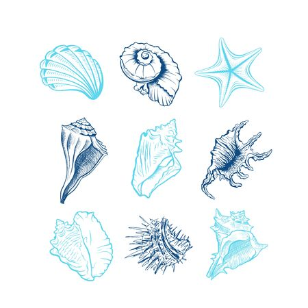 Seashells hand drawn vector illustrations set. Underwater animals, starfish, sea urchin blue ink engravings isolated on white background. Oceanic fauna, spiral shaped conch drawings. Tattoo, sticker