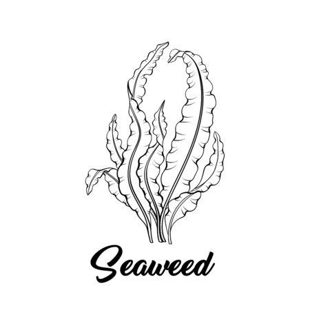 Illustration vectorielle d'algues noir et blanc. Flore sous-marine tropicale, croquis à main levée de plante de fond marin. Décoration d'aquarium. Laminaria, algues, ingrédient alimentaire sain. Magasin de produits marins
