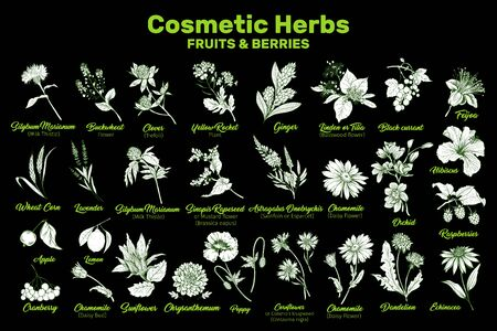 Cosmetic Herbs, Fruits and Berries Vector Collection. Hand drawn plants illustrations set. Essential organic oils ingredients for cosmetics and medicine. Ilustração