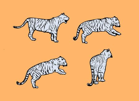 tigers wild cat vector set. Light Blue Bengal Tiger Animals Icons for Print or Tattoo Design. Hand-drawn Freehand Zoo Illustration. Art Drawing of Isolated Circus Animal Ilustração