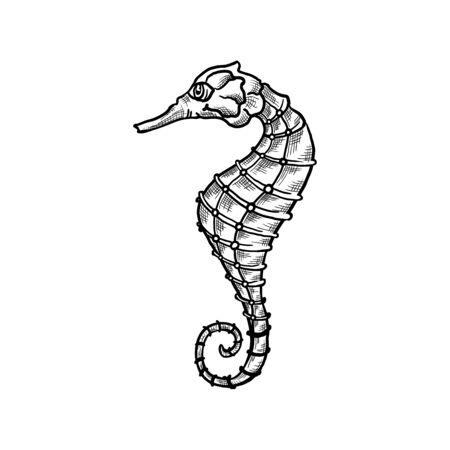 Seahorse vector sketch and thin line art aquatic animal with pencil hatching texture. Oceanairum and tropical aquarium fauna seahorse, underwater marine wildlife, hand drawn icon isolated on white Vektoros illusztráció