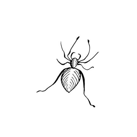 Halloween spider doodle element. Isolated vector illustration of insect Illustration