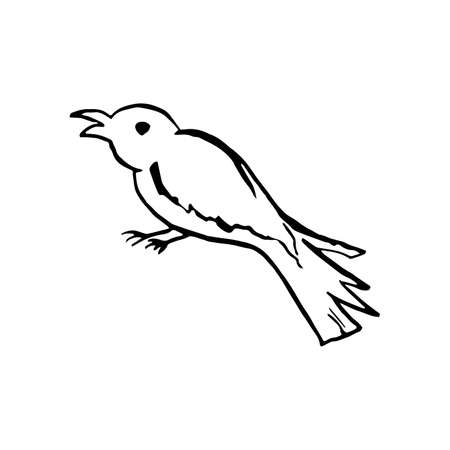 Halloween doodle crow or magpie bird element. Isolated vector illustration for horror design