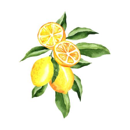 Lemons Watercolor Composition, arrangement design isolated on white. For menu design, cocktail party decorations