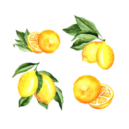 Lemons Arrangement Watercolor Set. Vector artistic collection isolated on white. cocktail party decorations