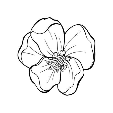 Japanese apple tree flower head contour drawing, vector isolated illustration for tattoo and laser cutting