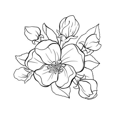 Japanese apple tree flower bouquete contour drawing, vector isolated illustration for tattoo and laser cutting