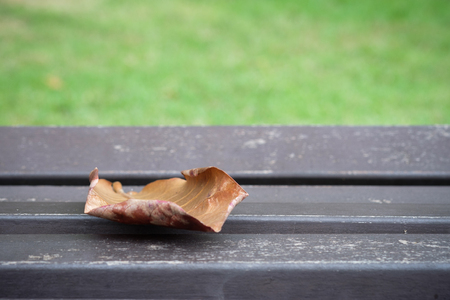 surrounded: Dry leaf on a wooden chair , surrounded by green grass .