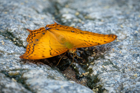 Yellow butterfly on the rocks