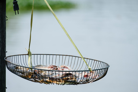 food preservation: Sun dried fish on the grill fan in the sun,Food preservation is the way of the locals. Stock Photo
