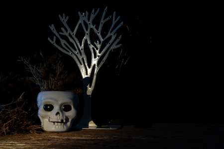 cranium: Dark halloween white cranium with dried flower. Low key tone
