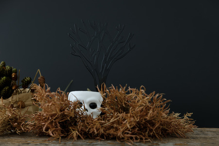 cranium: Dark halloween white cranium   with dried flower, Sleep on a nest made of grass and hide under bushes. Low key tone