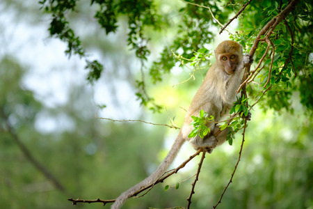 Monkeys sitting on a tree, lives in a natural forest of Thailand, With space to write. Stock Photo