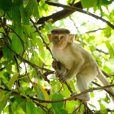 Monkeys on a tree, lives in a natural forest of Thailand, With space to write.