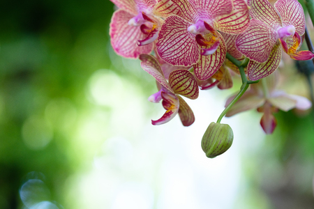 Beautiful orchid flower with natural background, Select the focus and blur. Stock Photo