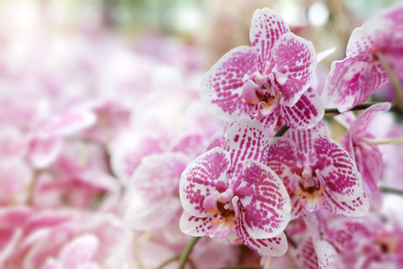 Beautiful orchid flower with natural background, Select the focus and blur, Make Lens Flare.