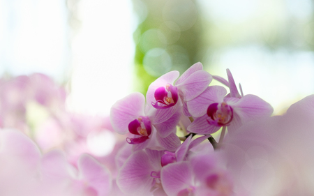Beautiful orchid flower in Morning sun with natural background, Select the focus and blur, Make Lens Flare.
