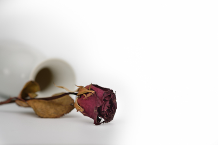 antique vase: Still life with flower near the ceramic vase on white background, Choose a focal point, copy space for write. Stock Photo