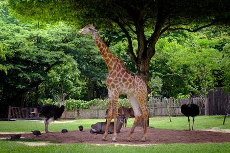 Giraffe, antelope and ostrich standing in the green garden.