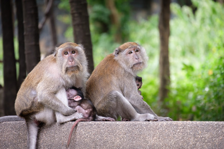 Monkey family sitting in a garden with trees.