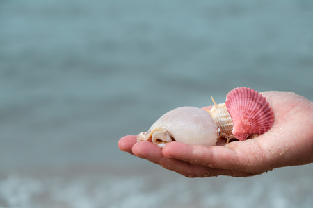 Many shells on womans hands by the sea.