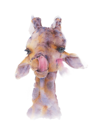 Hand drawn watercolor illustration of Giraffe is sticking tongue licking the nose isolated on white background.