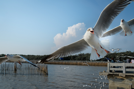 The seagulls frying at The Bang Pu Recreation Center in Samutprakarn, Thailand.