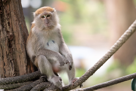 A cute monkey lives in a natural forest of Thailand. Stock Photo