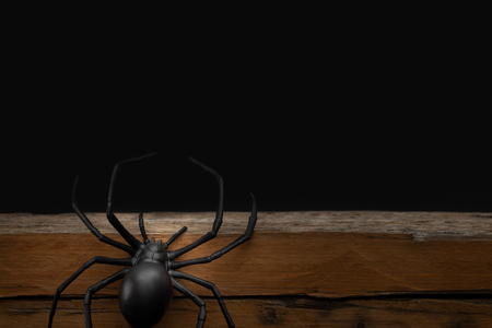 Fake rubber spider toy  on black background, halloween concept.