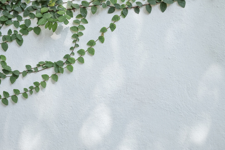 Tree branch with green foliage on old cement wall background.