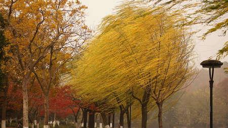 weeping willow: Weeping Willow Lake