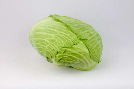 sprouting: Cabbage Stock Photo