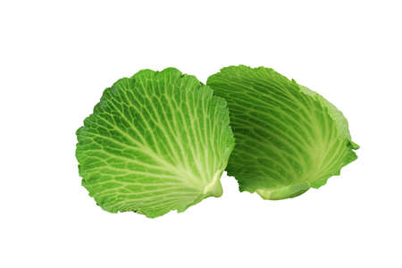 larger: Cabbage Stock Photo
