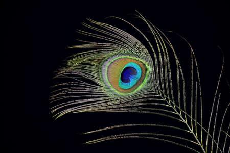 plumas de pavo real: Plumas de pavo real