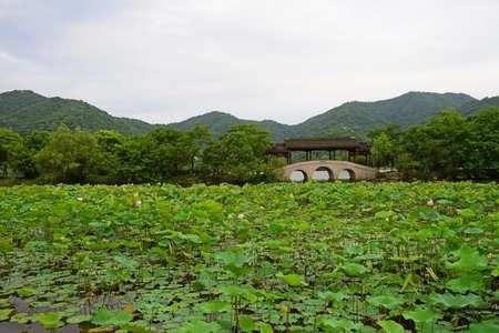 riverside tree: Scenery at Xianghu lake of Hangzhou