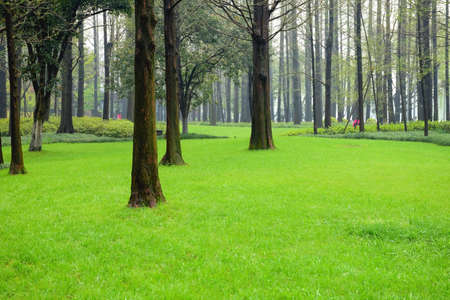 eye shade: Grass and trees