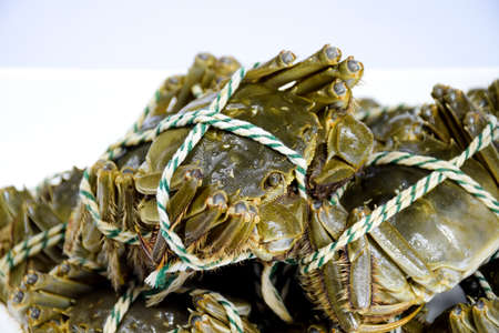 crabs: Lake crabs crabs close-up
